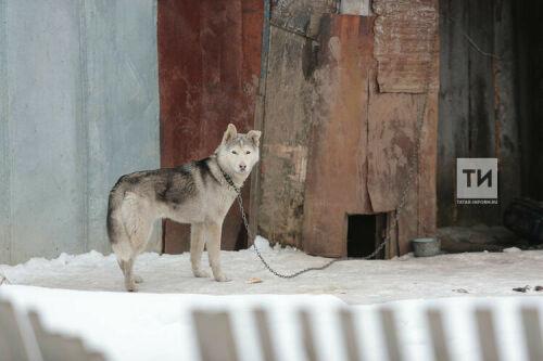 «Бродячих собак и лис у нас полно»: что стало причиной карантина в казанском поселке Вишнёвка?