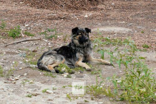 «Что пишут в Казани»: дипломатический скандал, малолетние руферы и новое нападение бродячих псов
